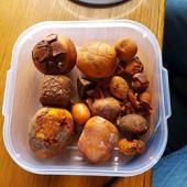 Buy Cow / Ox Gallstone available On Stock Now @ (WhatsApp: +2376